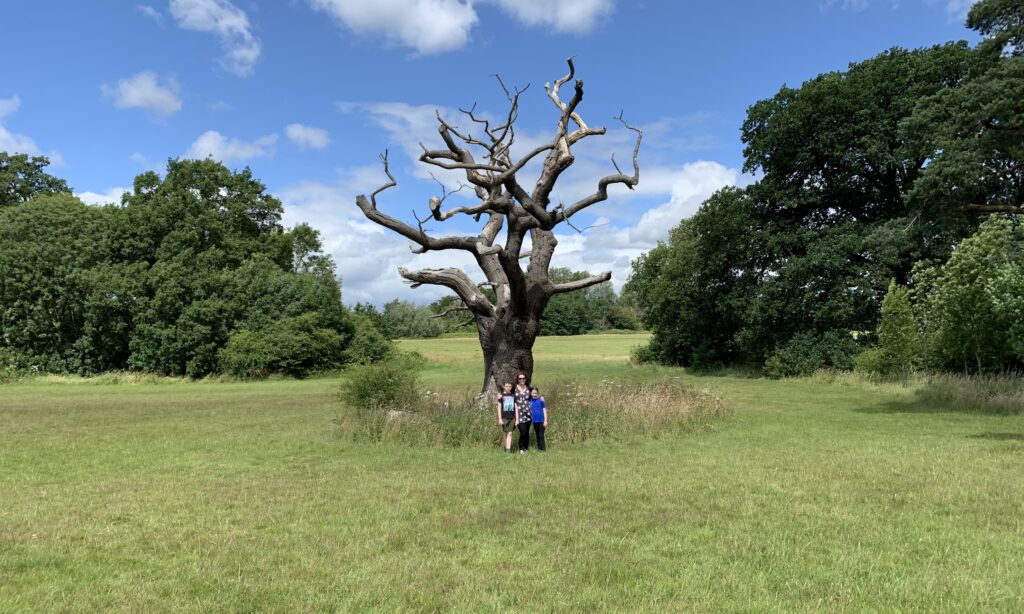 The Parklands at Hylands Park Chelmsford